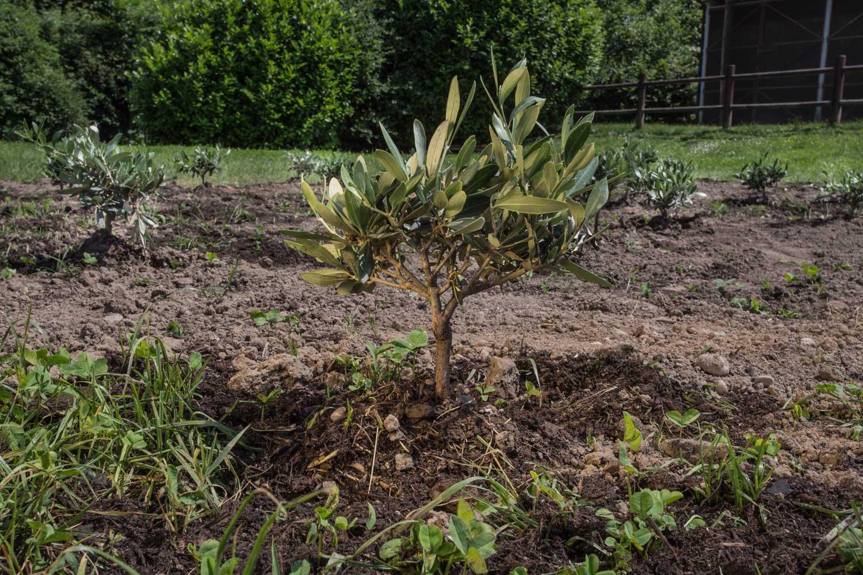 pianta sul terreno